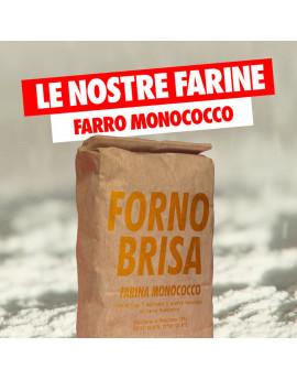 """Farina Brisa """"Monococco"""""""