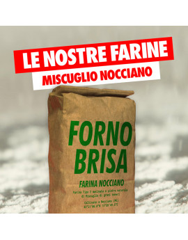 """Farina Brisa """"Nocciano"""""""